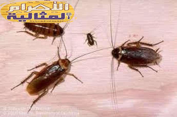 Photo of شركة مكافحة حشرات بالرياض 0501176189
