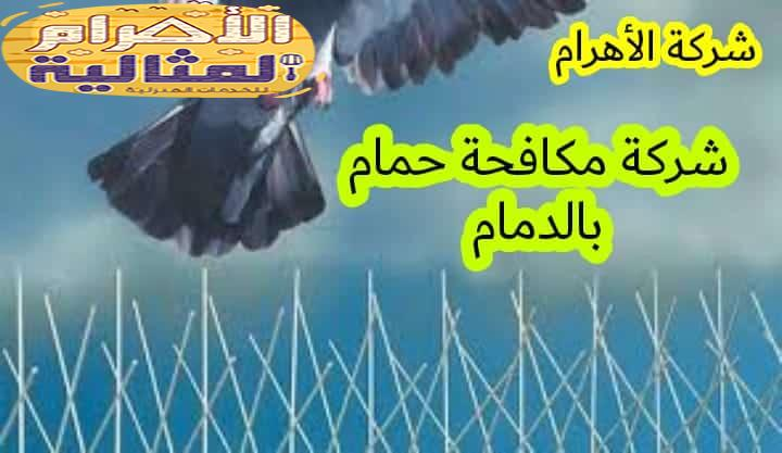 Photo of شركة مكافحة حمام بالدمام 0501176189  وتركيب طارد حمام اتصل بنا